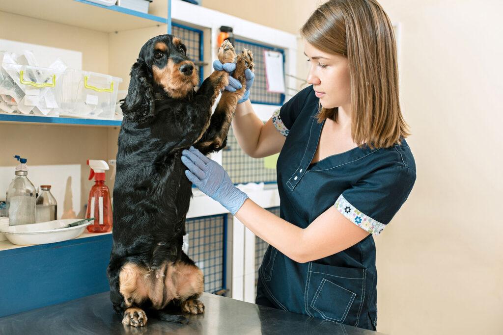 pet vaccination examination