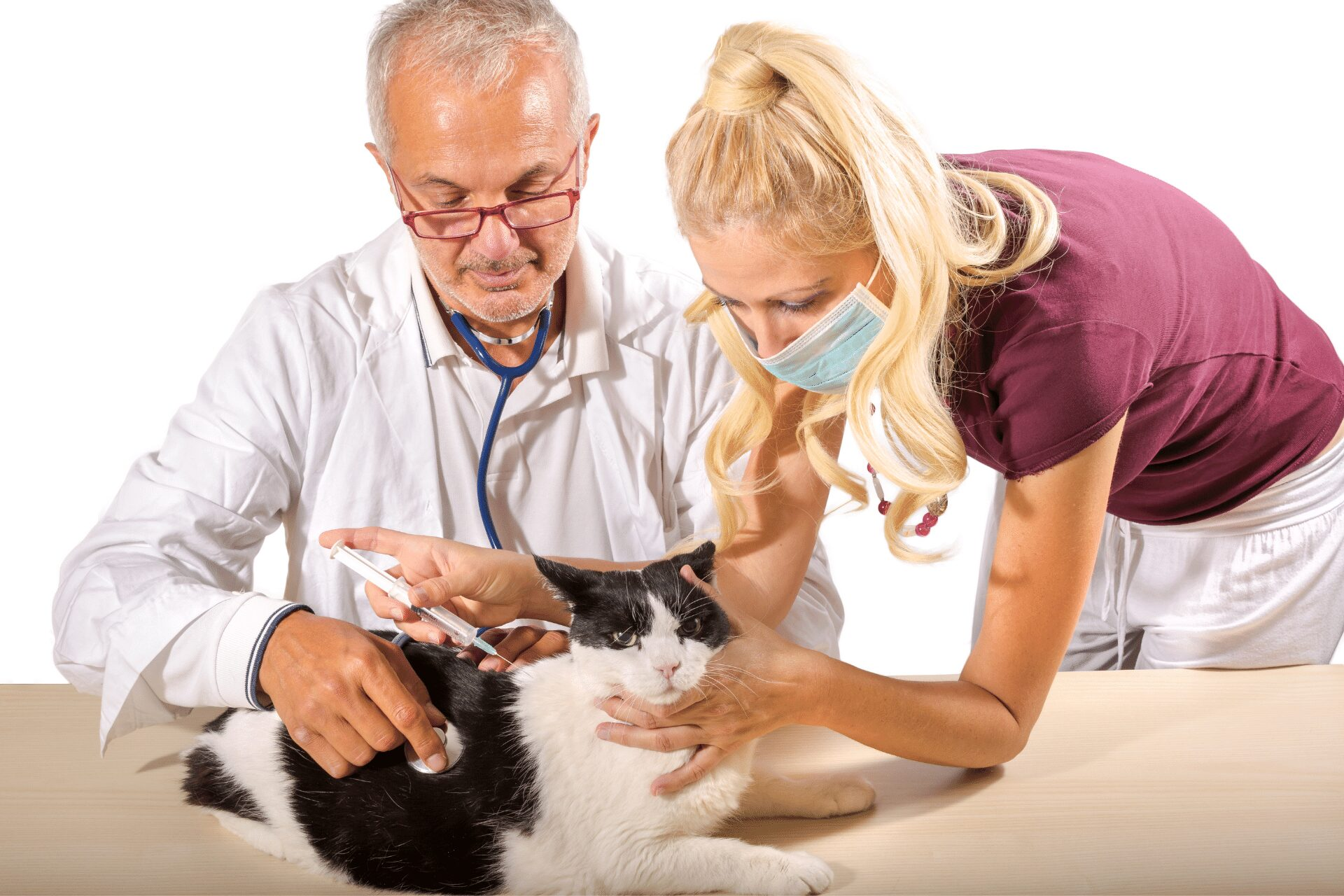 cat vaccination clinic